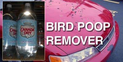 club soda cleans bird poop off cars